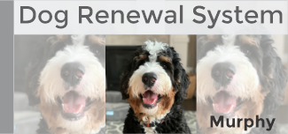 New! Online Dog Renewal System.
